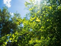 Sous la lumière du soleil Photos stock