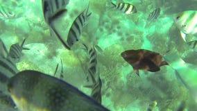 Sous la mer banque de vidéos