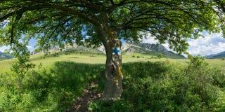 Sous la nuance d'arbre Image stock