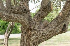 Sous la nuance des arbres Photos stock