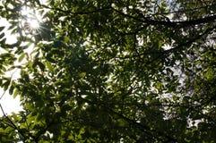 Sous la nuance du soleil Image stock