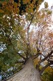 Sous la robe d'automne Images libres de droits
