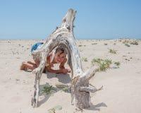 Sous la voûte en bois Image stock