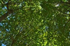 Sous la vue d'arbres Images stock
