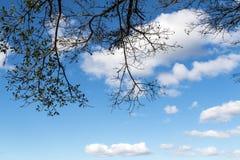Sous la vue des branches d'arbre contre le ciel nuageux bleu Photo libre de droits