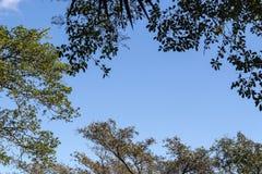 Sous la vue des branches d'arbre contre le ciel nuageux bleu Photographie stock