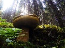 Sous le champignon Images stock