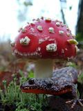 Sous le chapeau de champignon Images stock