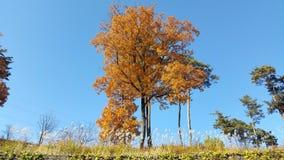 Sous le ciel d'automne Images stock