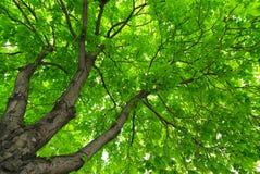 Sous le grand arbre. image stock