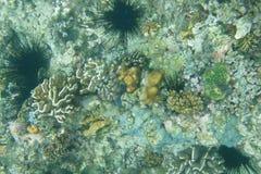 Sous le monde de l'eau photos libres de droits