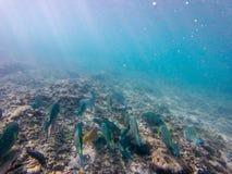 Sous le monde de l'eau Images libres de droits