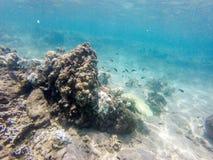 Sous le monde de l'eau Photo stock