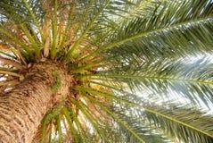 Sous le palmier Photographie stock libre de droits