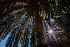 Sous le palmier Image libre de droits