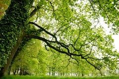 Sous les arbres Images libres de droits
