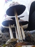 Sous les champignons images libres de droits