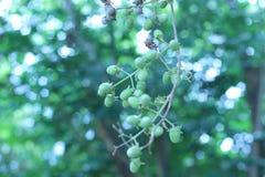 Sous les grandes branches d'arbre soyez fort et beau photo libre de droits