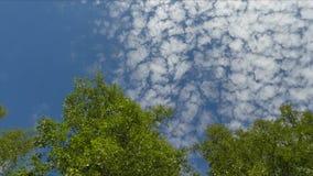 Sous les nuages d'été banque de vidéos