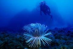 Sous-marin images libres de droits