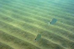 Sous-marin Photo stock