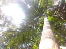 Sous un arbre Images libres de droits