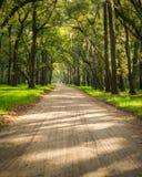 Sous un auvent de Live Oaks et de mousse espagnole sur l'île d'Edisto près de Charleston, Sc Images stock