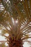 Sous un palmier Image libre de droits