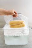 Sous vide cooking of corncobs Royalty Free Stock Photography