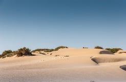 Souss Masa National Park Royalty Free Stock Image
