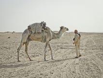 Bedouin leads over camel in the Sahara desert stock photo