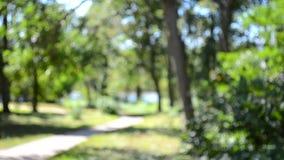 Soustrayez le sentier de randonnée brouillé de milieux en parc feuillu vert banque de vidéos