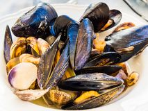 Soutè with clams and mussels stock photos