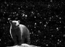Soutenez le portrait d'hiver avec l'obscurité et la neige sur le fond Photos libres de droits