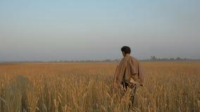 Soutenez, les promenades adultes d'un homme le champ de blé banque de vidéos