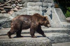 Soutenez marcher dans le zoo La vie sauvage de mammifères photos stock