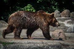 Soutenez marcher dans le zoo La vie sauvage de mammifères photos libres de droits