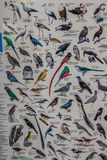 South Africa birds chart for birding enthusiasts. South African birds chart for birding enthusiasts showing all variety of birds of Africa stock image
