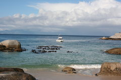 South Africa boulders beach. Nature Royalty Free Stock Images