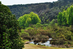 South Africa, East, Mpumalanga province, landscape, green, climate change, woods, bridge. South Africa, 01/10/2009: a wooden bridge in the green landscape of royalty free stock image