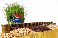 South Africa flag waving with stack of money coins and piles of wheat stock images