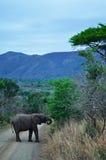 South Africa, Hluhluwe Imfolozi Game Reserve, KwaZulu-Natal Royalty Free Stock Photos
