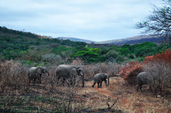 South Africa, Hluhluwe Imfolozi Game Reserve, KwaZulu-Natal Stock Images