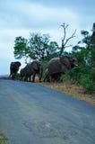 South Africa, Hluhluwe Imfolozi Game Reserve, KwaZulu-Natal Stock Image