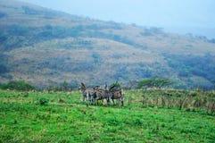 South Africa, Hluhluwe Imfolozi Game Reserve, KwaZulu-Natal Stock Photography