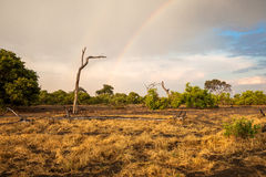 South Africa landscape with a rainbow. South African landscape of savanna in Botswana with a rainbow Royalty Free Stock Image