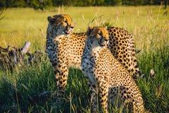 South Africa - Sabi Sand Game Reserve Stock Photos
