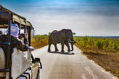 Kruger National Park, South Africa. South Africa. Safari in Kruger National Park - African Elephants Loxodonta africana Stock Photo
