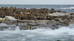 South Africa Seal Island. South Africa`s Seal Island is a small island on Hout Bay, known for its numerous seals and gulls. South Africa`s Seal Island, formerly royalty free stock images