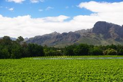 South Africa vineyard valley landscape. Western Cape stock photos